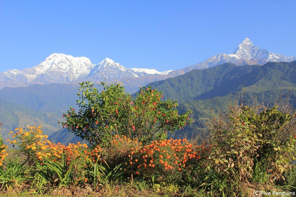 「はなのいえ」からのアンナプルナの眺望(アスタム/ネパール)