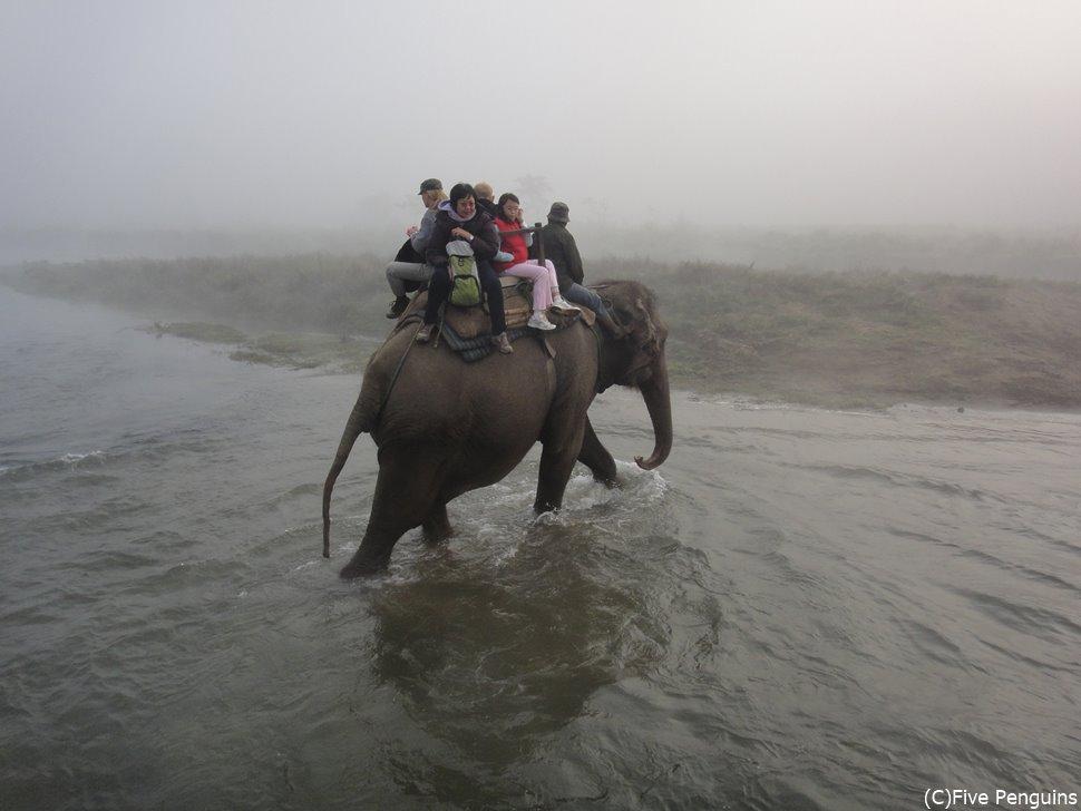 ゾウに乗って川を渡りサイを探す(チトワン国立公園/ネパール)