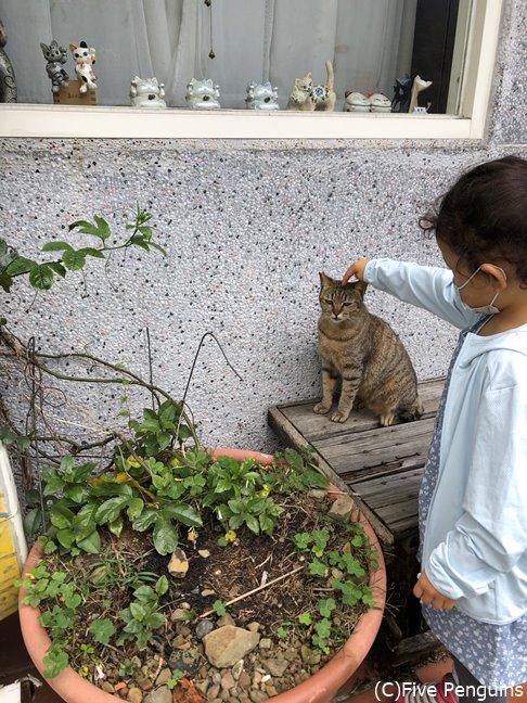 猫村で思う存分、猫と戯れよう!