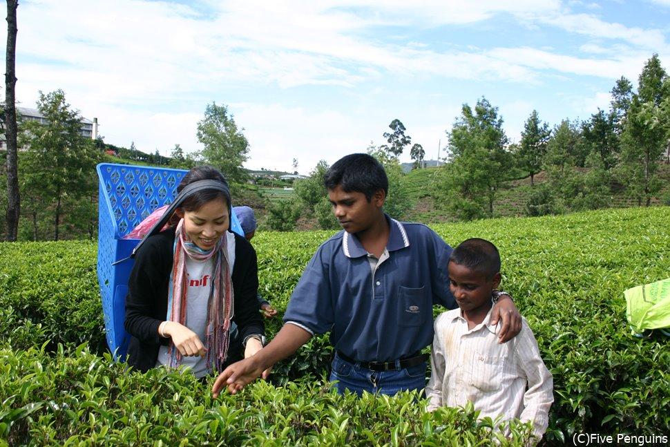 絶景かな♪ 緑が一面に広がる茶畑でお茶摘み体験