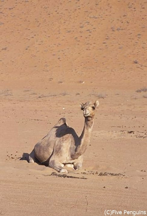 こちらもワヒバ砂漠