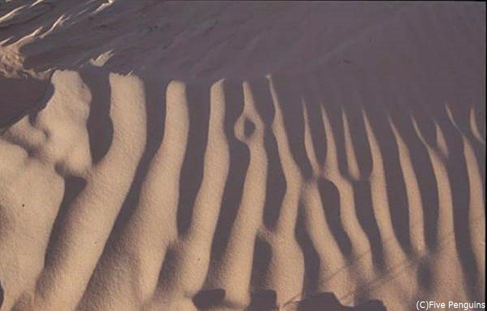 ルブアルハリ砂漠の写真がないため、ワヒバ砂漠を