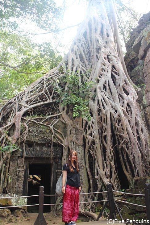 タプローム遺跡。血管のように根を張る木