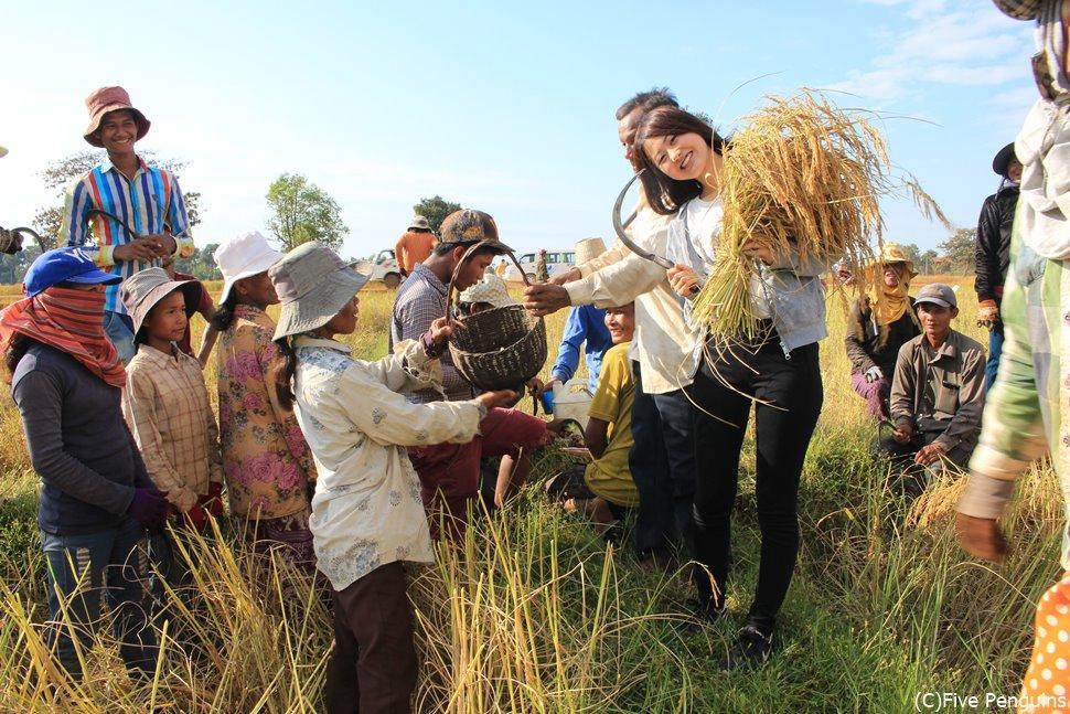 ベンメリア周辺の田園/収穫体験