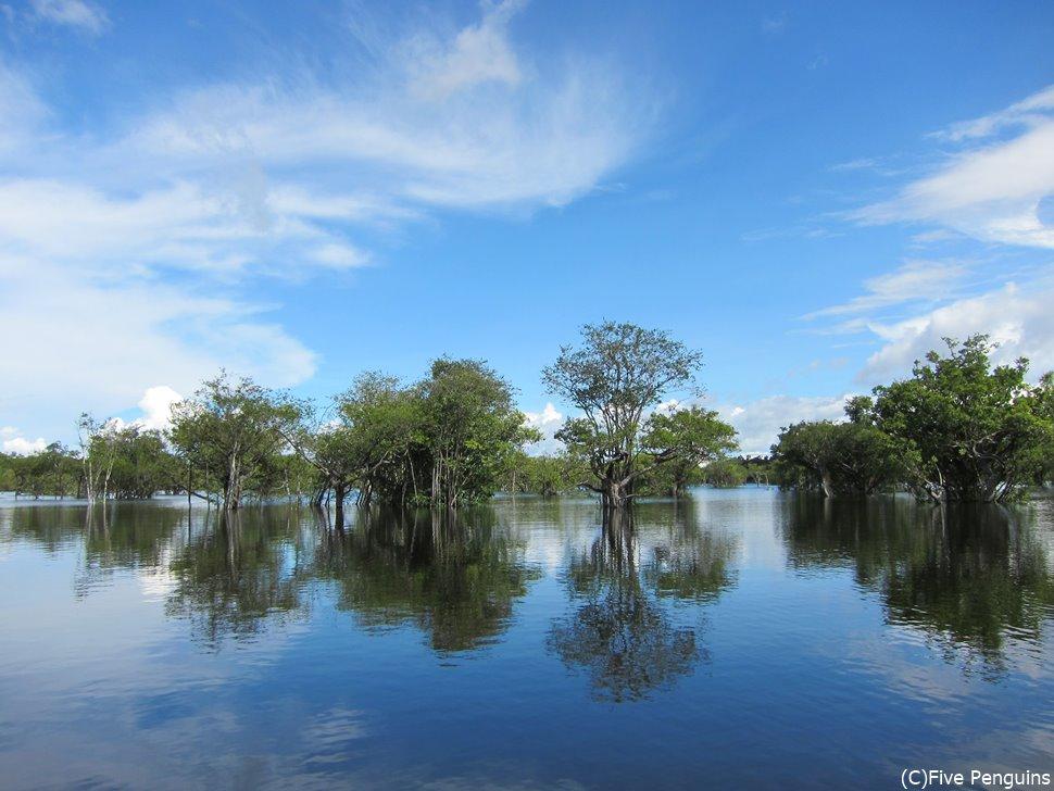 水中林(アマゾン河)