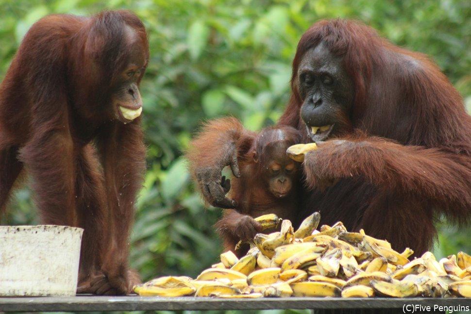 親子で仲良くバナナをほおばる姿にほっこり