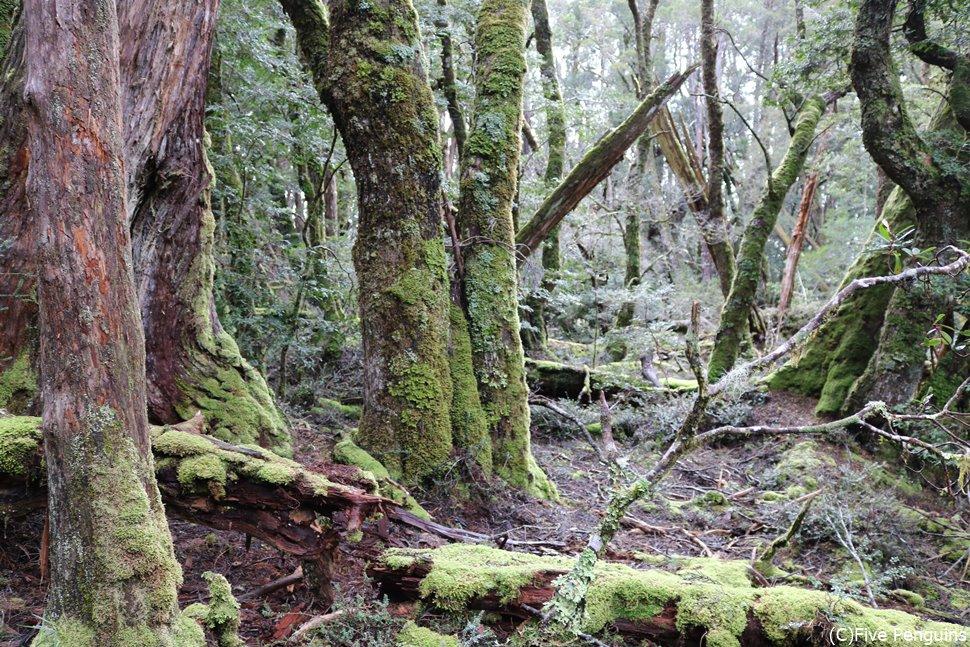 苔むした木々が雰囲気抜群
