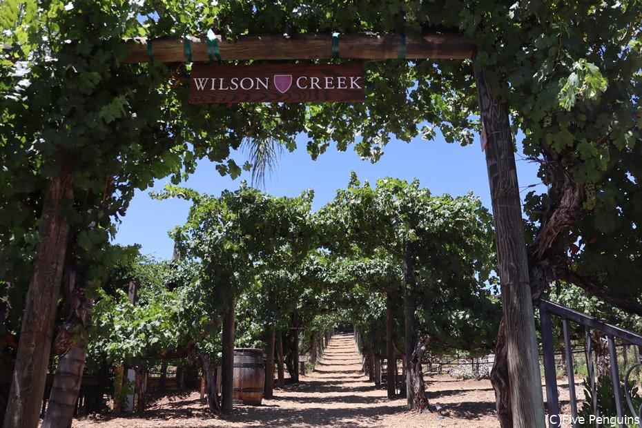 ウィルソンクリークではブドウ畑を散策できます♪