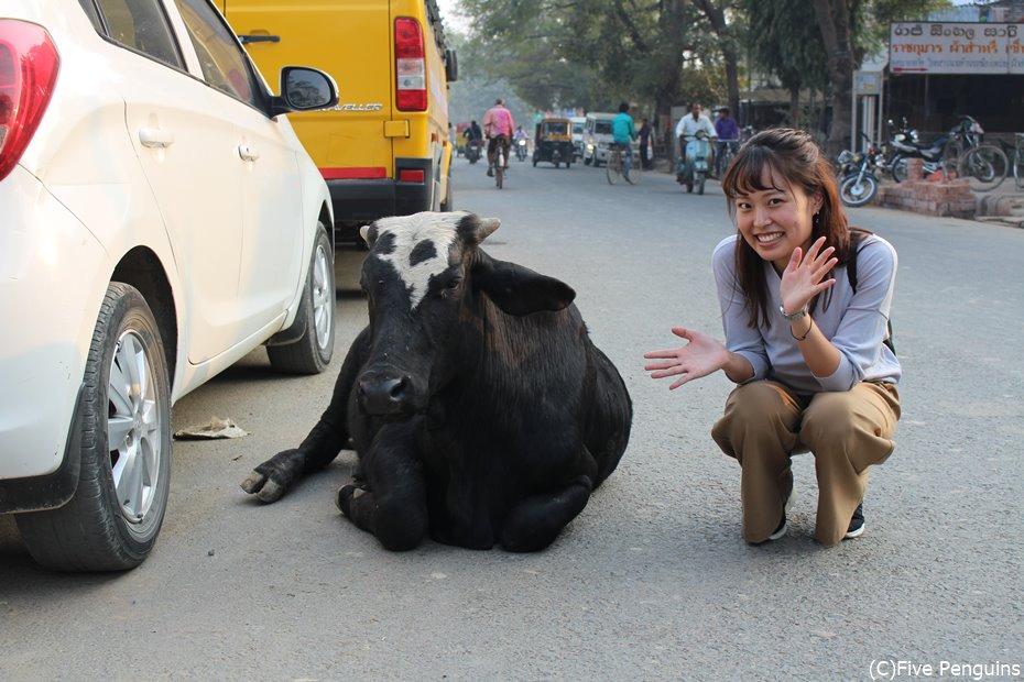 道路のど真ん中に牛。さすがインド!これぞインド!な風景です。