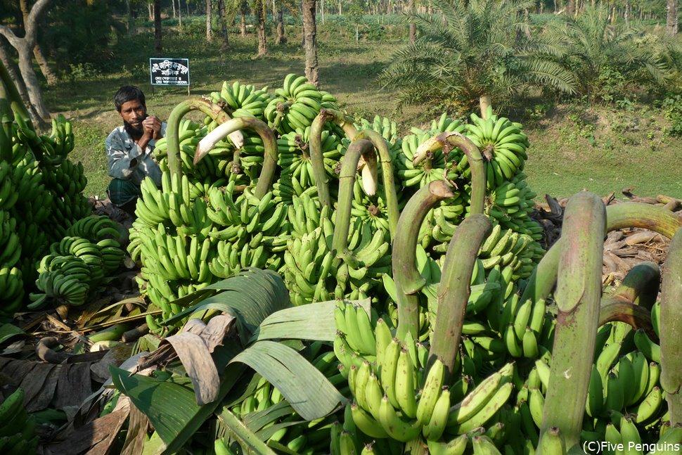 道端で売られるバナナ