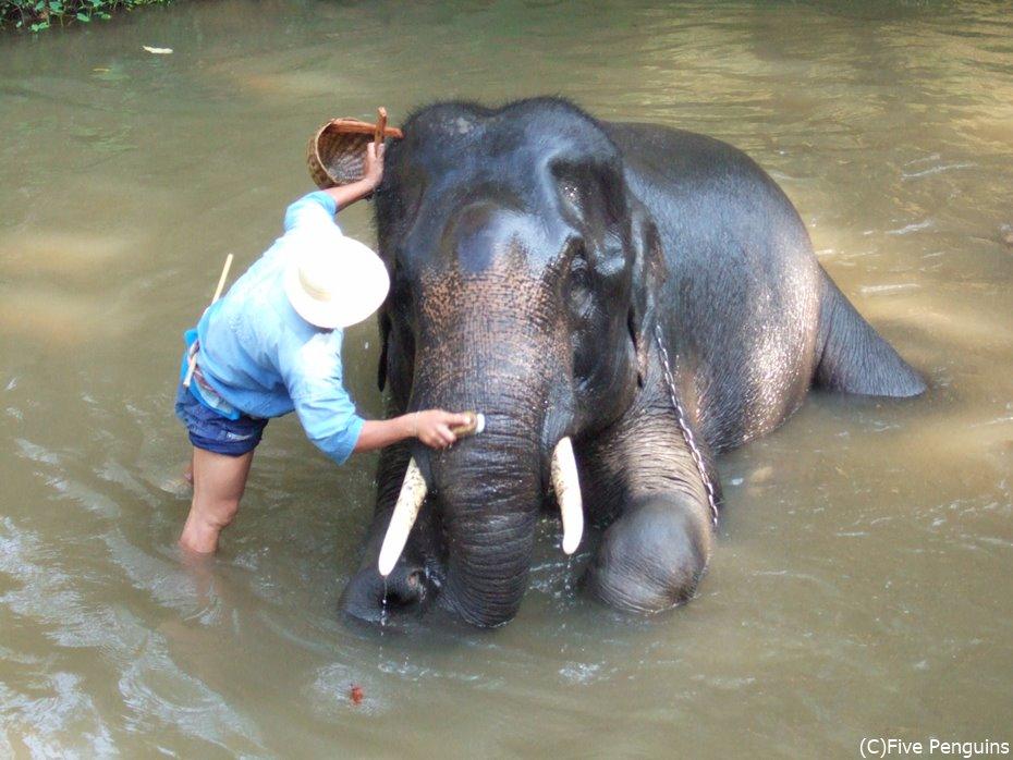 より自然な姿を求めて…。象と人間の共存、新しいカタチが今ここに。