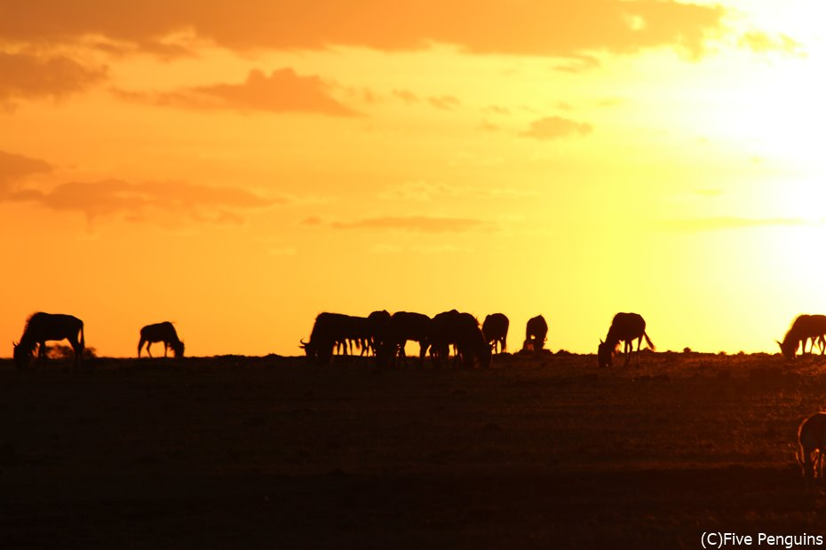 サバンナで見た夕日は一生忘れられない景色です