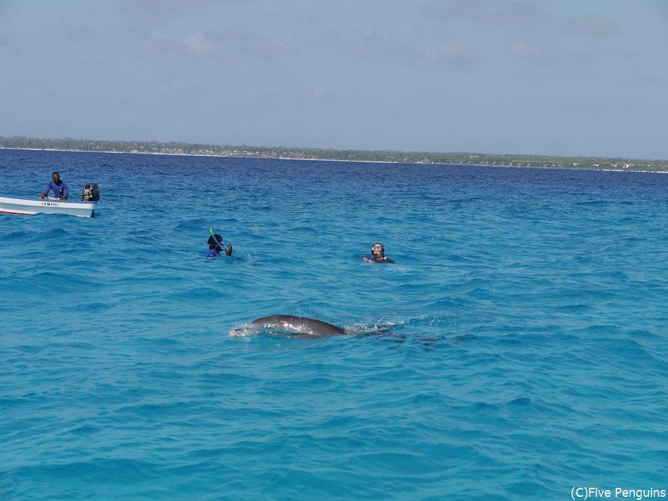 ドルフィンスイムツアーにてイルカと泳ぐ