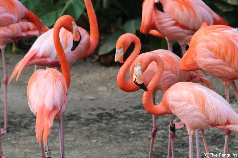 エンペラーバレー動物園