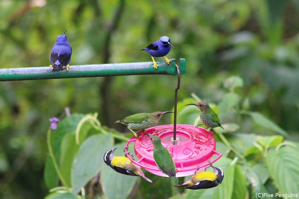 砂糖水に集まる小鳥たち