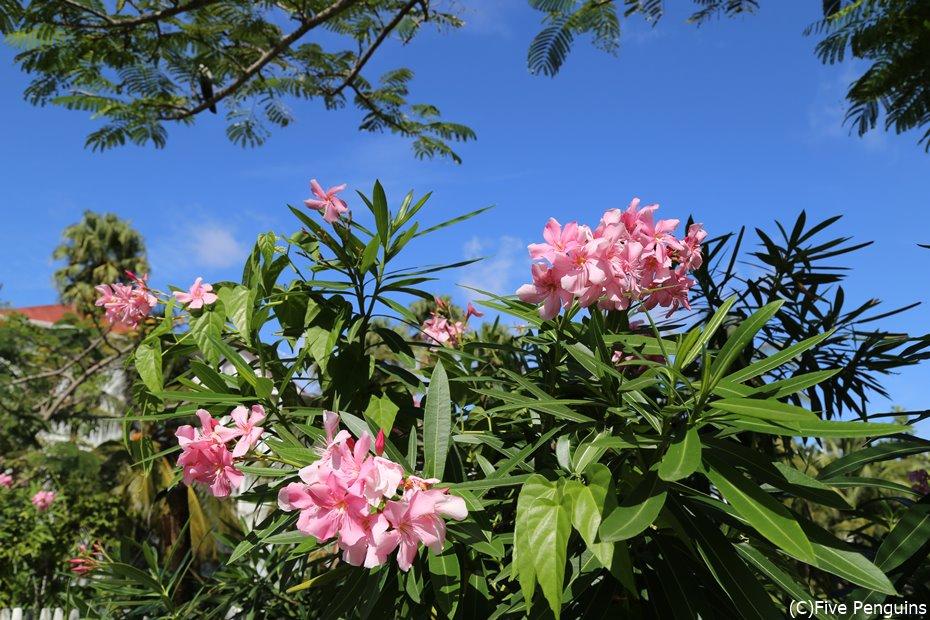 ガイアナ熱帯植物園(ジョージタウン)