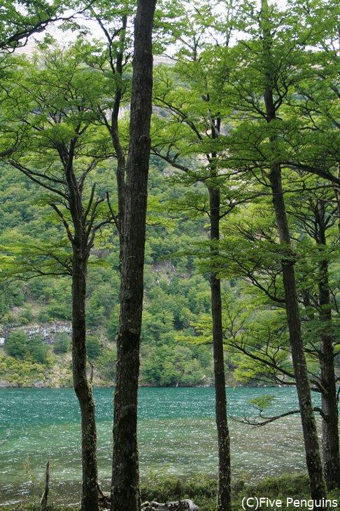 デシエルト湖畔は森!