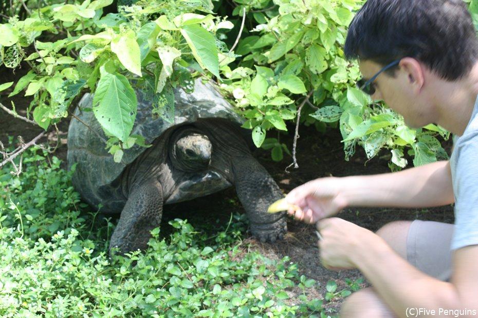 ゾウガメに餌をあげてみる