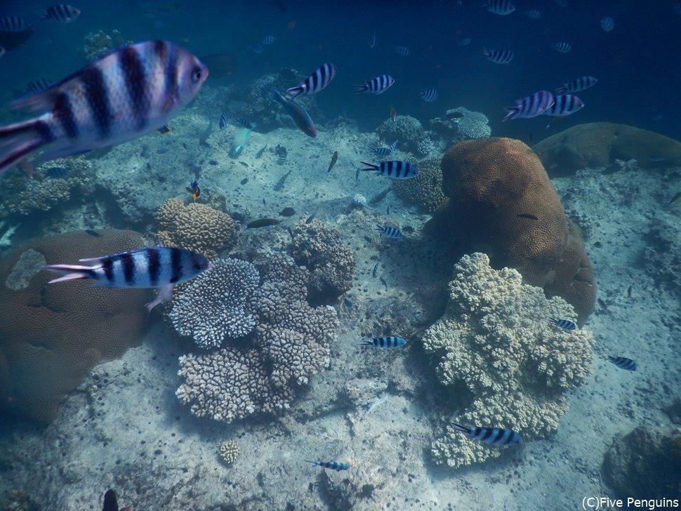 たくさんの魚が見られる透き通った美しい海