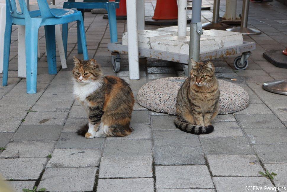やっぱり猫はどこの国でも可愛い~!