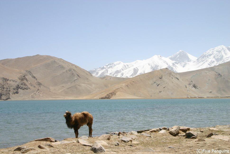 湖近くにはカザフ族やキルギス族が住み、ツアーによっては家庭訪問も。