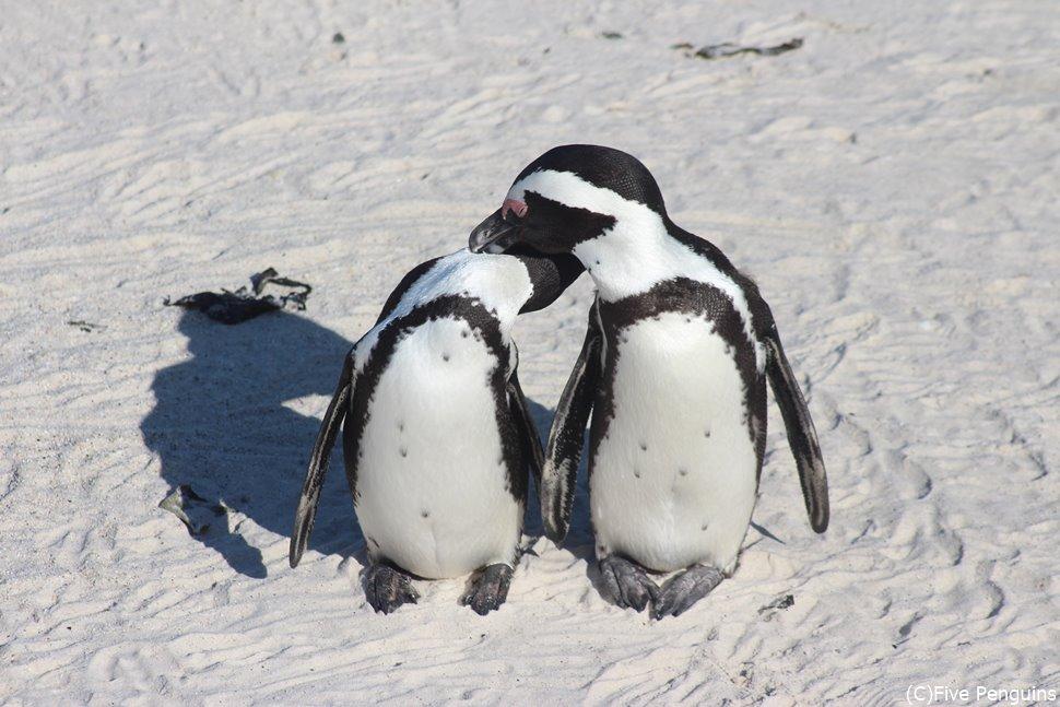 仲睦まじいペンギンさん