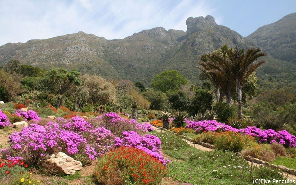 珍しい花々が色鮮やかに咲くアフリカのお花畑