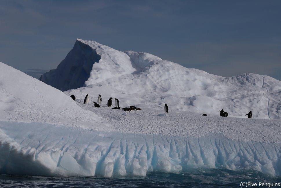 ゾディアッククルーズ中にペンギン発見