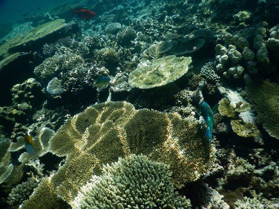 サンゴ礁の美しさは抜群