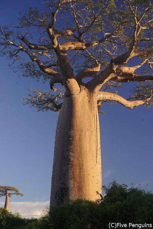 不思議な大きな木